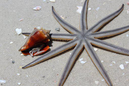 Animals, Beach, Starfish, Nature, Sea, Most Beach