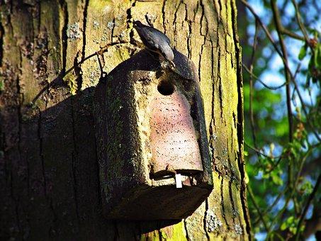 Bird, Shed, Lęg, Nature, Little Bird, Ornithology