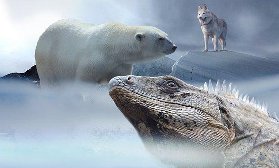 Polar Bear, Husky, Iguana, Ice, Mountains, Snow, Wolf