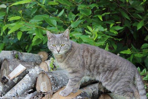 Cat, Pose, Animal, Pet, Posing, Cute, Domestic, Funny