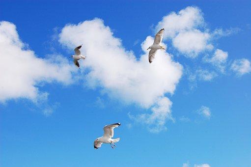 Gulls, Sea, Sky, Seevogel, Animal, Seagull, Water Bird