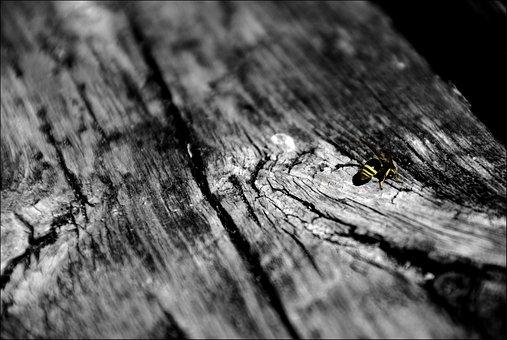 Sw, Bee, Wood