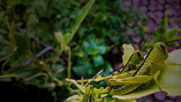 Nature, Leaf, Close Up