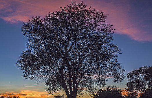 Tree, Sunset, Nature, Sunrise, Landscape, Sunlight, Sky