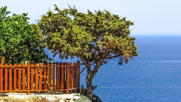 Tree, Sea, Cliff, Landscape, Blue, Horizon, Scenery