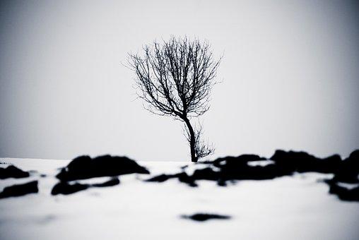 Winter, Sw, Tree