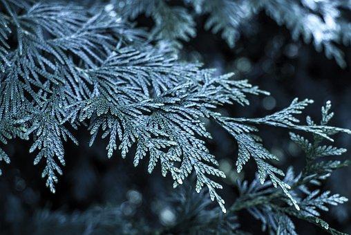 śnige, Christmas Tree, Frost, Bush, Winter, Nature