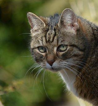 Animals, Cat, Attention