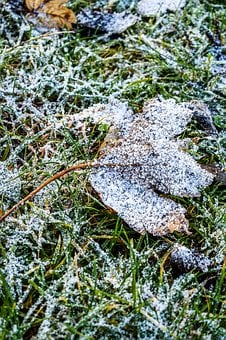 Snow, Gel, Cold, Leaf, Dead Leaf, Frozen, Grass, Green