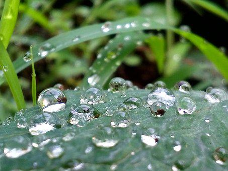 Water, Leaf, Nature, Green, Plant, Environment, Summer
