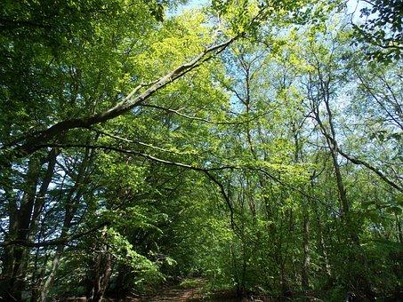 Leaves, Woods, Forest, Nature, Sunlight, Trees, Season