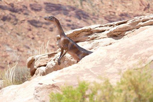 Dinosaur, Utah, Rock, Fossil, Prehistoric, Usa, Animal