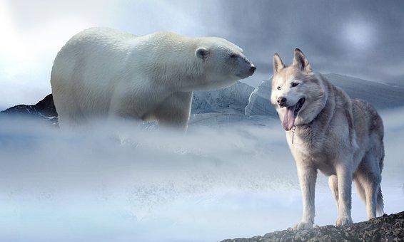 Ice, Snow, Polar Bear, Wolf, Husky, Glacier, Ice Age