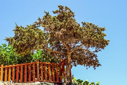 Juniper, Tree, Cliff, Landscape, Mediterranean, Scenery