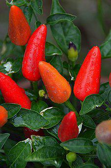 Pepper, Vegetables, Red, Food, Spice, Red Peppers