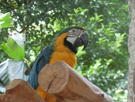 Macaw, Parrot, Singapore-bird-park, Tropical, Exotic
