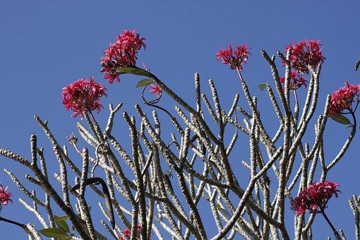 Anggrek, Flower, Bali, Natural, Purple, Plants, Nature