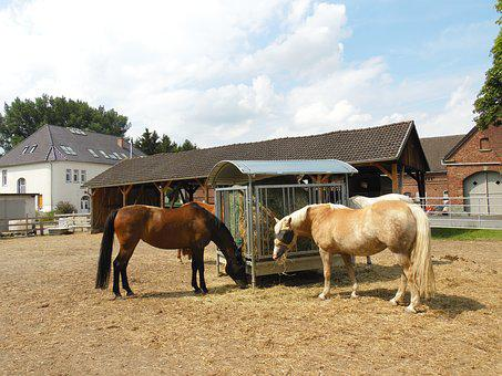 Horses, Horse Head, Mare, Animal Portraits, Ride