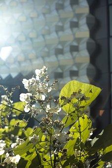 Architecture, Plant, Modern, City, Building, Home