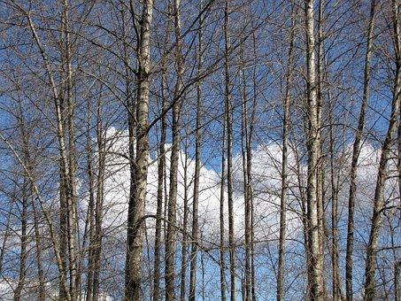 British Columbia, Coquitlam, Lafarge Lake, Tree, Sky