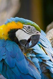 Bird, Bali, In, Nature, Tropical, Wildlife, Indonesia