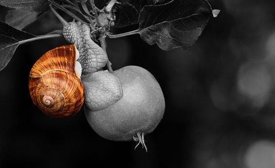 Snail, Apple, Shell, Tree, Apple Tree, Fruit, Nature