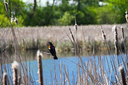 Bird, Pond, Water, Wildlife, Lake, Wild, Nature, Park
