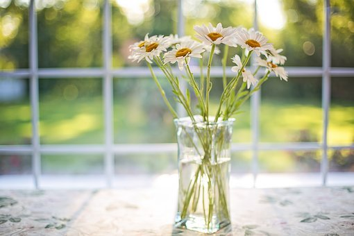 Daisies, Vase, Window, Floral, Bouquet, Blossoms