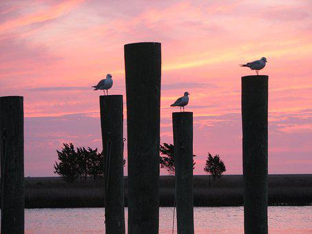 Water, Dusk, Skyline, Twilight, Birds