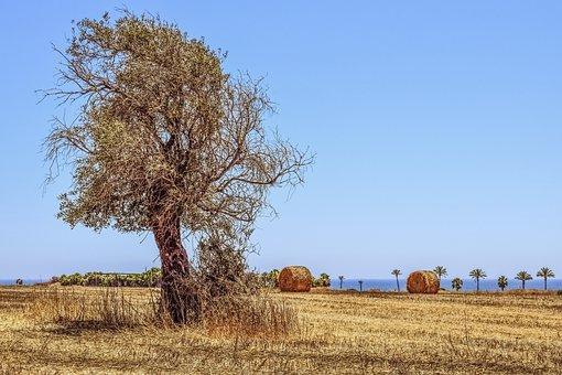 Tree, Field, Agriculture, Landscape, Mediterranean