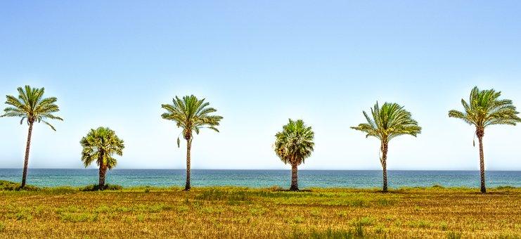 Palm Trees, Landscape, Sea, Horizon, Summer, Nature