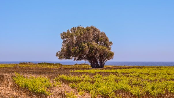 Tree, Field, Landscape, Horizon, Mediterranean, Nature