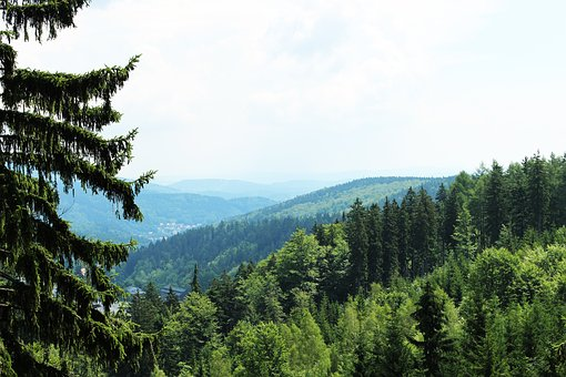 The Giant Mountains, Nature, Czech Republic, Forest