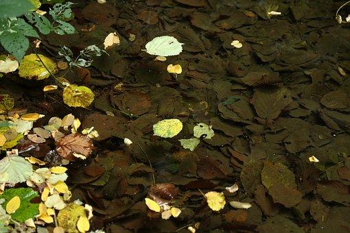 Leaves, Autumn, Nature, Autumn Woods, Brown Leaf