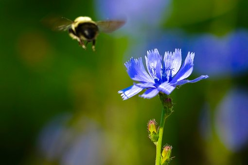 Bees, Flower, Purple, Spring, Insect, Flying, Honey