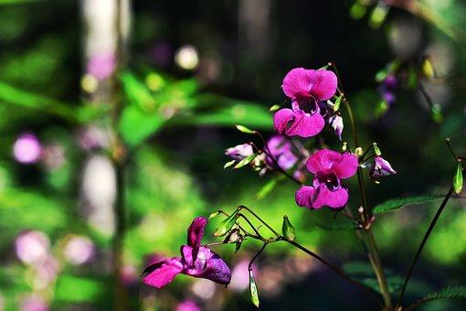 Forest, Flower, Garden, Nature, Summer, Spring, Close