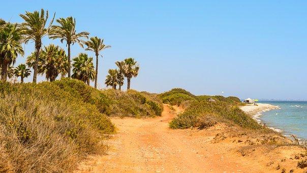 Palm Trees, Landscape, Summer, Nature, Island