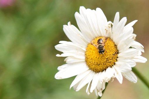 Flowers, Honey, Bees, Nature, Yellow, Garden, Nectar