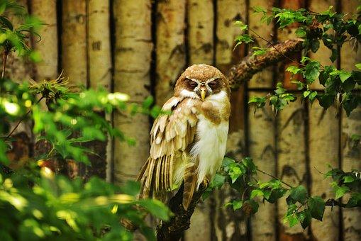 Owl, Bird, Feather, Cute, Plumage, Animal World, Bill