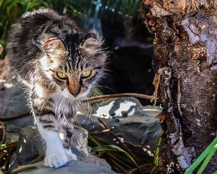 Cat, Stray, Eyes, Looking, Homeless, Garden, Young