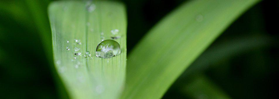 Nature, Water, Wet, Drops Of Water, Transparent Water