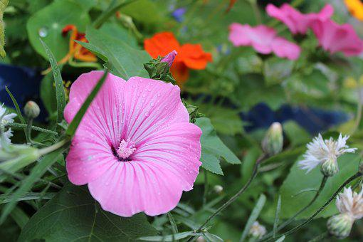 Blossom, Bloom, Rain, Wet, Mix, Raindrop, Close