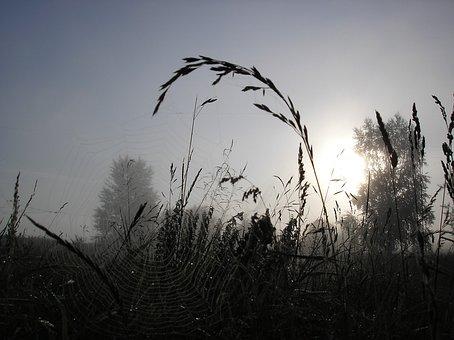 Grass, Fog, Morning, Leaves, Spider Web, Spider, Summer