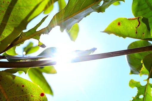 Tree, Sunlight, Forest, Nature, Sun, Sunny, Landscape