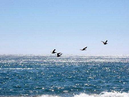 California, Santa Cruz, Water, Coastline, Tourism