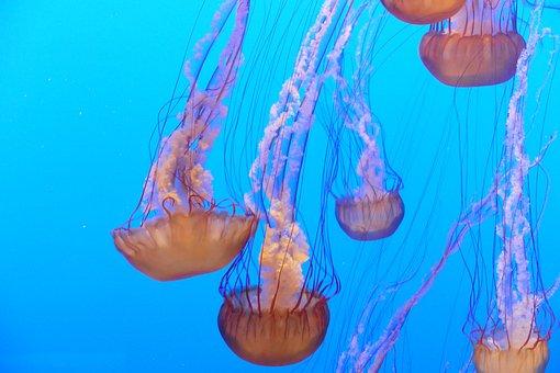 Ocean, Jellyfish, Aquarium, Water, Sea, Wildlife