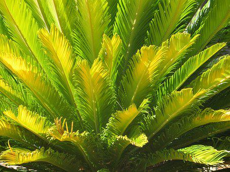 Palm, Plant, Desert, Jungle, Leaf, Nature, Botanical