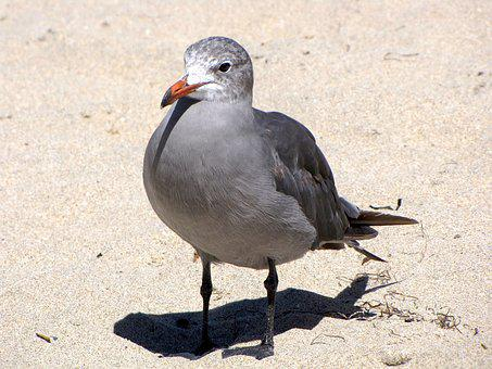 California, Santa Cruz, Coastline, Bird, Seagull, Beach