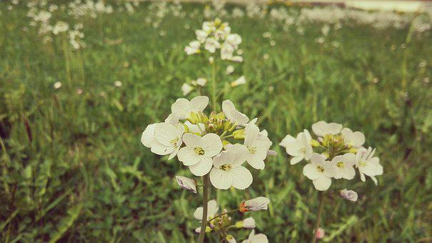 Flower, Summer, Filter