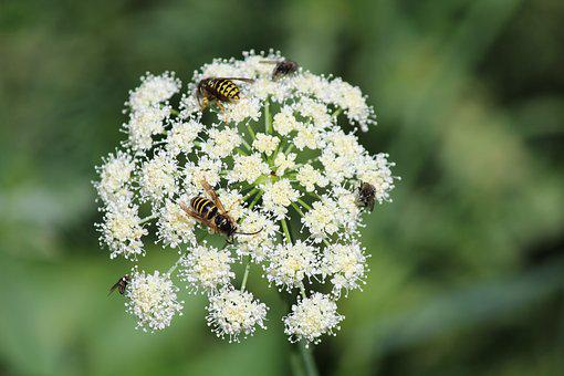 White Flower, Yellow Jackets, Flower, Green, Nature